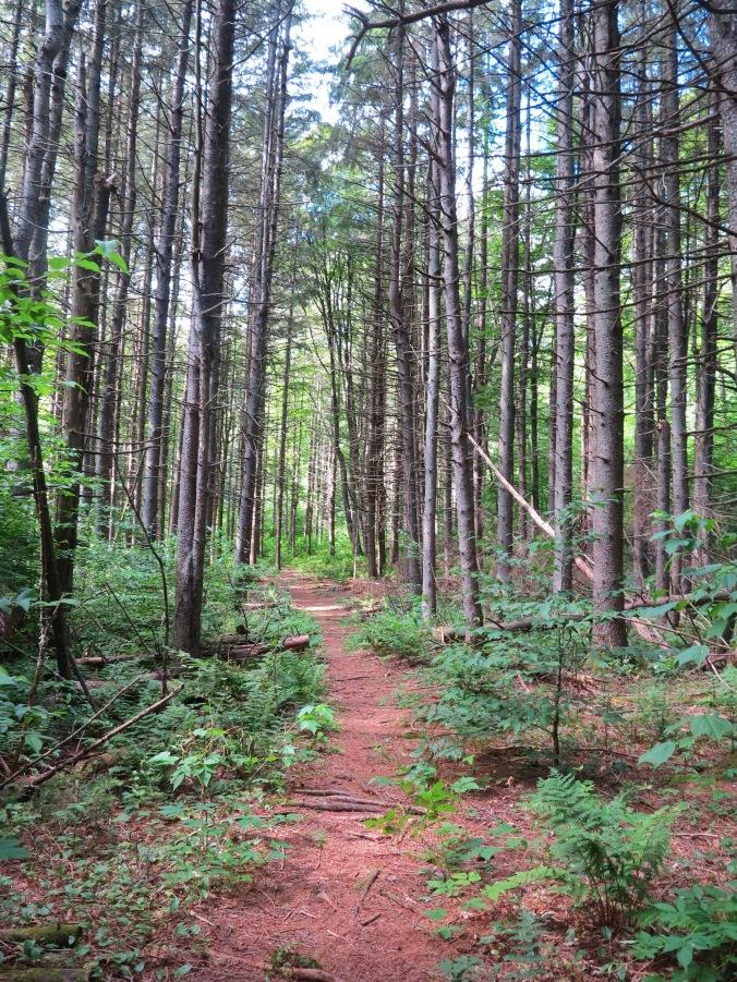 tory hikes